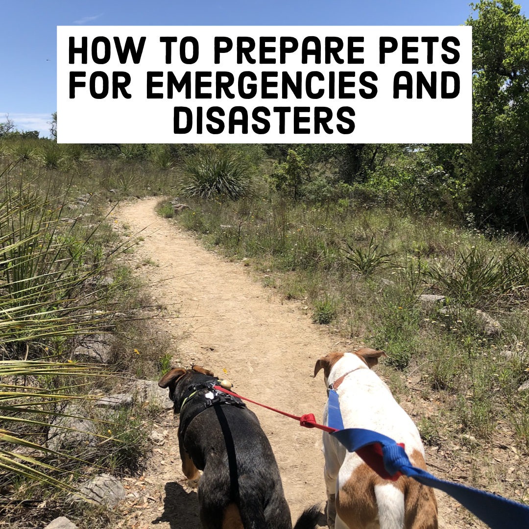 how to prepare pets for emergencies and disasters